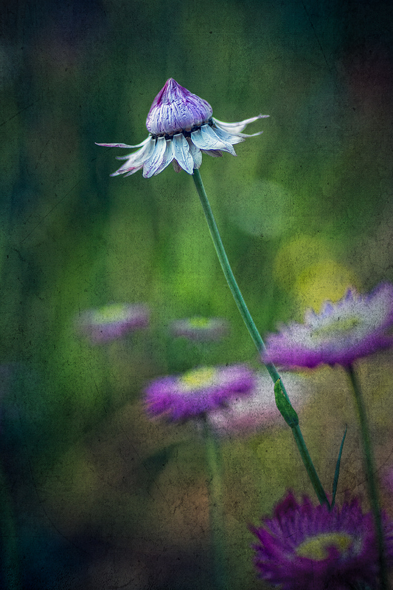 Photograph About to open by Bianca K on 500px