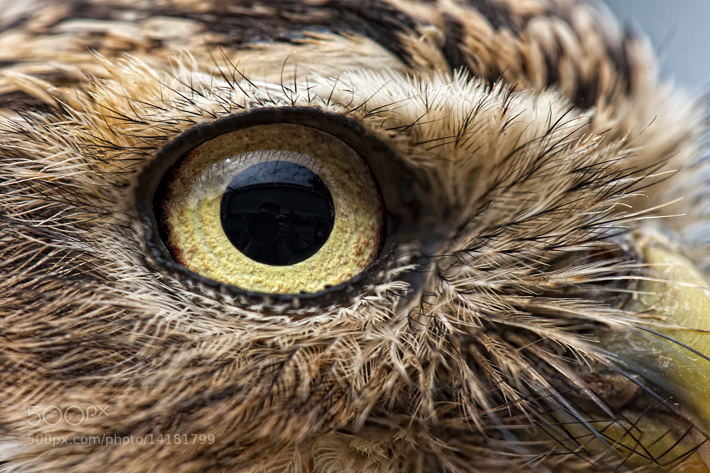 Photograph Owls eye by Martien Janssen on 500px