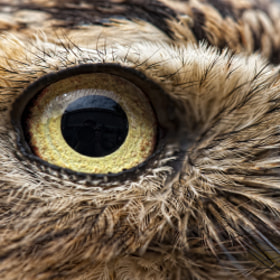 Owls eye by Martien Janssen on 500px.com