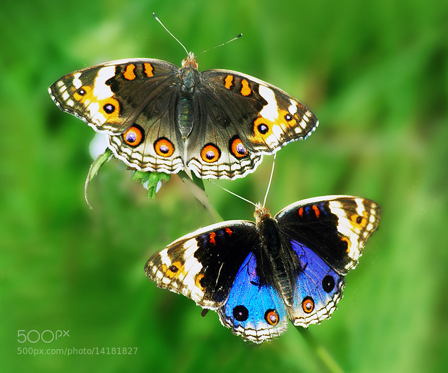 Photograph DOUBLE POSE by Edi Wibowo on 500px