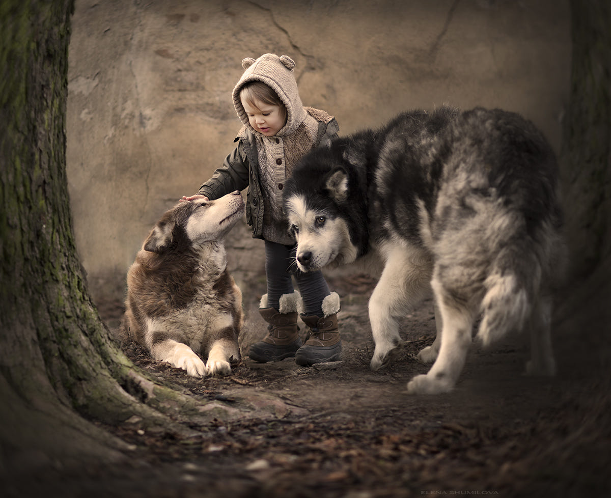 Solinka's dogs.. (Poland) by Elena Shumilova on 500px