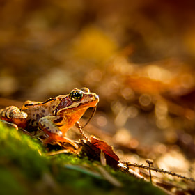 Morning Frog by Irene Mei on 500px.com