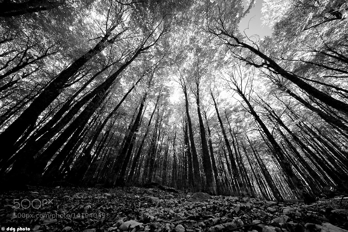 Photograph Horror Woods by Danilo Di Giovanni on 500px