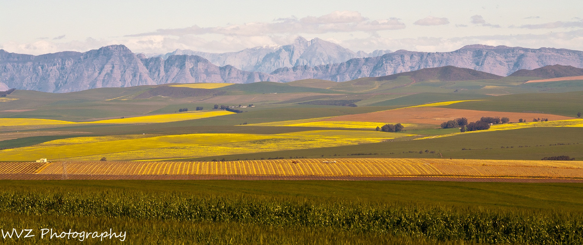 Photograph Canola fields by Wendy Van Zyl on 500px