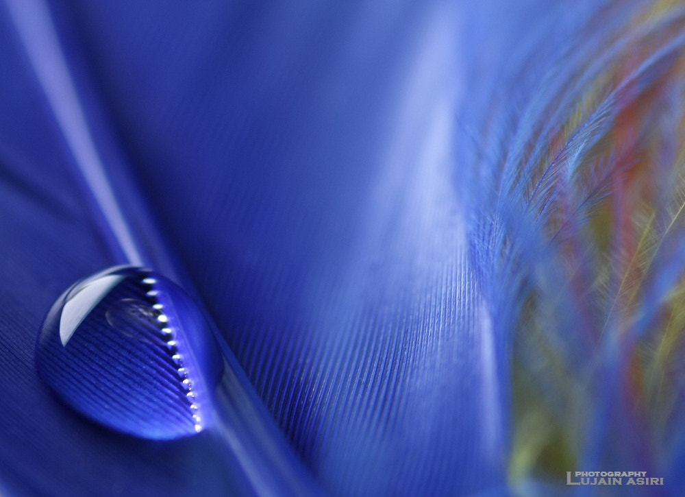 Photograph Drop   of   Water . . ! by لجين  عسيري | lujain asiri on 500px