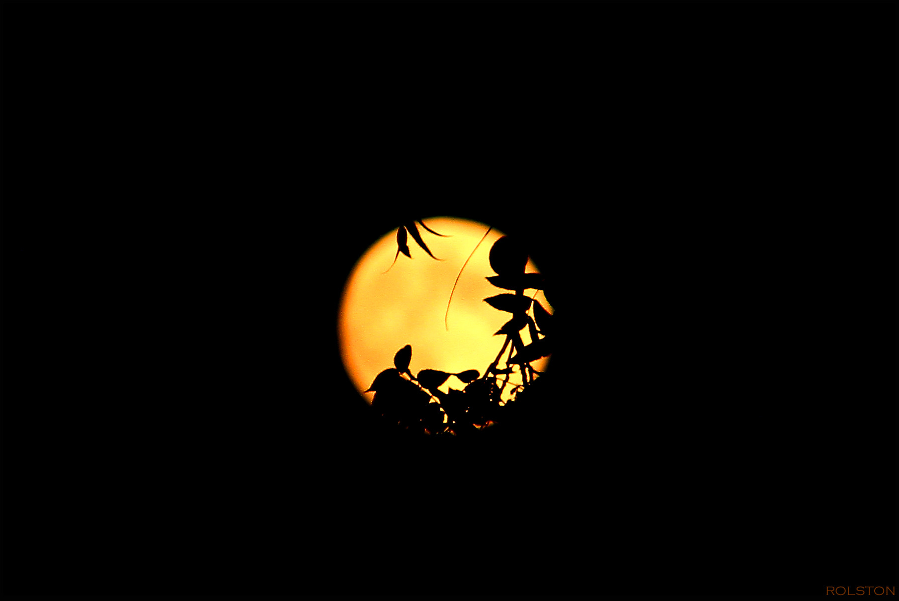 Photograph Moon Thru The Trees by Rachel Rolston on 500px