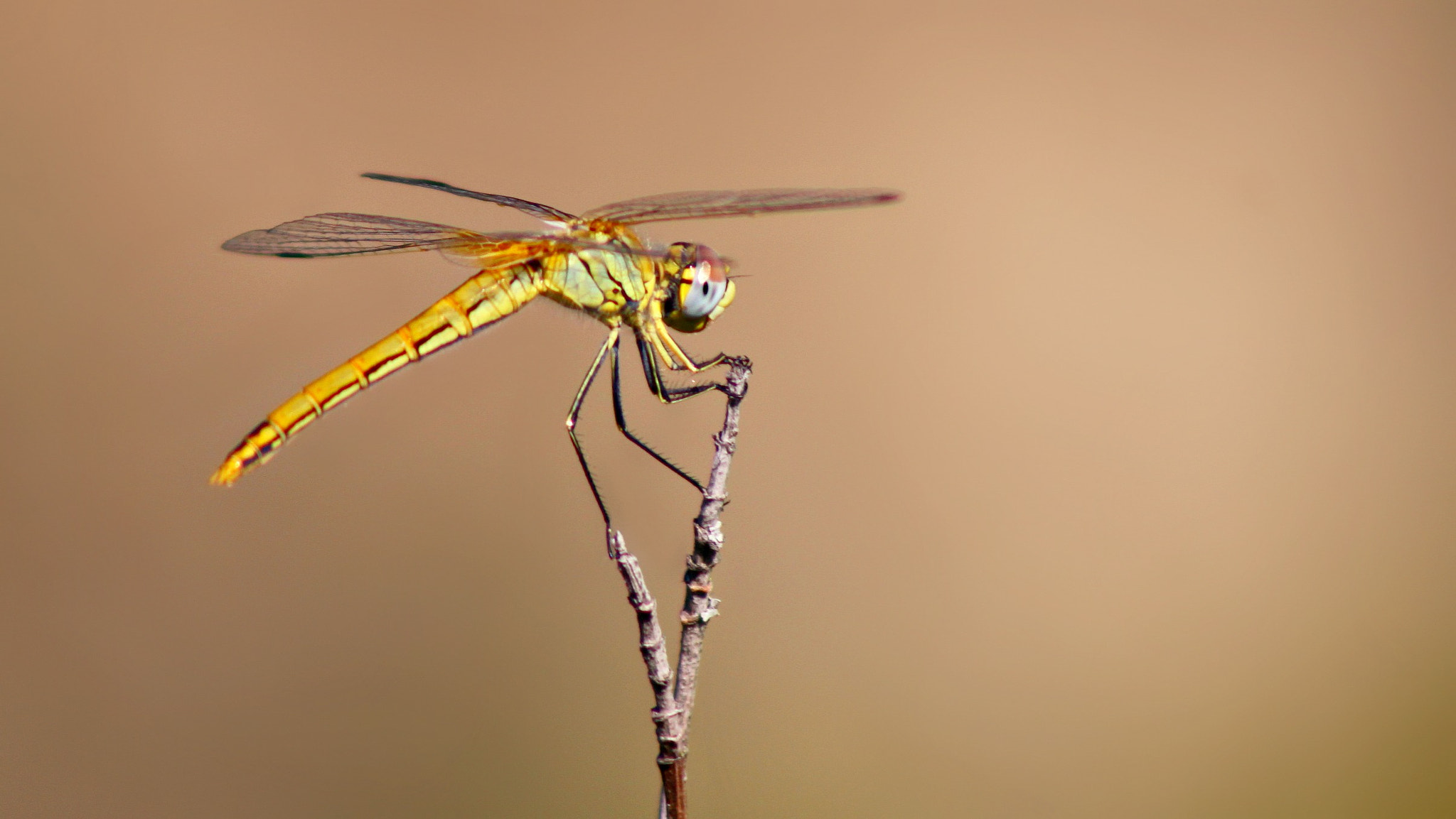 Photograph Dragonfly by Sandrine Fernandes on 500px