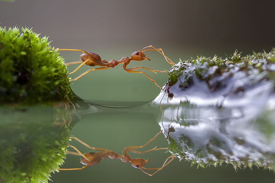 Crosser by teguh santosa on 500px.com