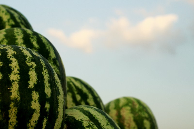 Photograph watermelon by mojtaba ghajar on 500px