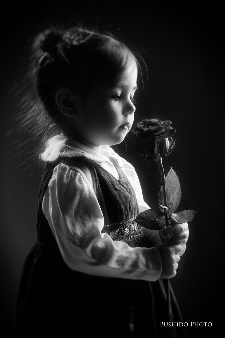 Photograph Rose for Santa by Chris Bergstrom on 500px
