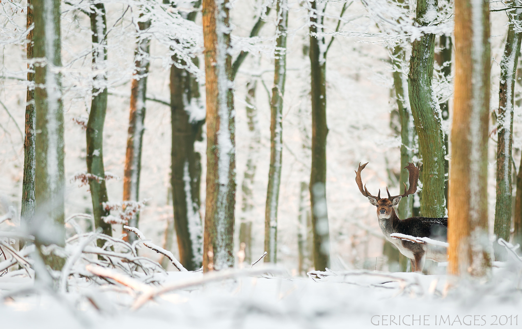 Photograph The Deer by Geriche  Images on 500px