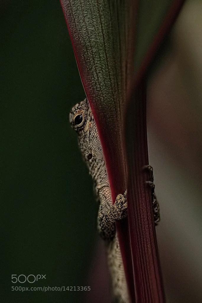 Photograph Shy Encounter by Linn Smith on 500px