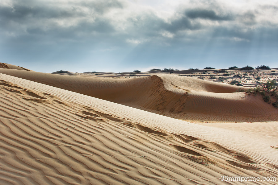 View in the Desert of Wahiba Sands