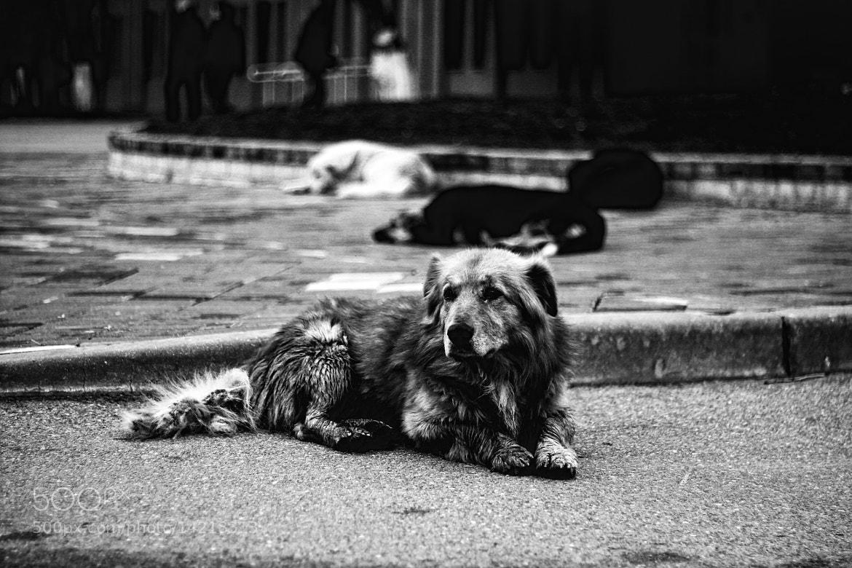 Photograph poor by Nastya Rogatko on 500px