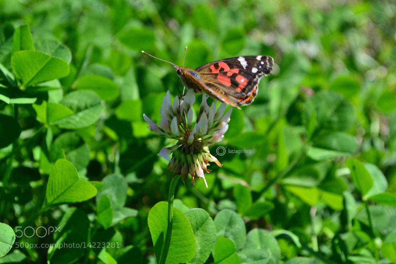 Photograph Sobre una flor blanca by Lucia Gerlero on 500px