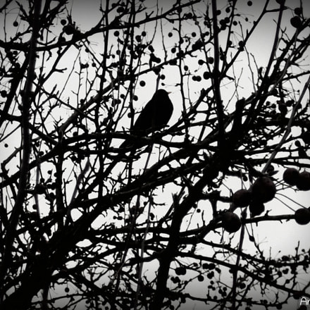 Bird in Tree, Fujifilm FinePix AV200