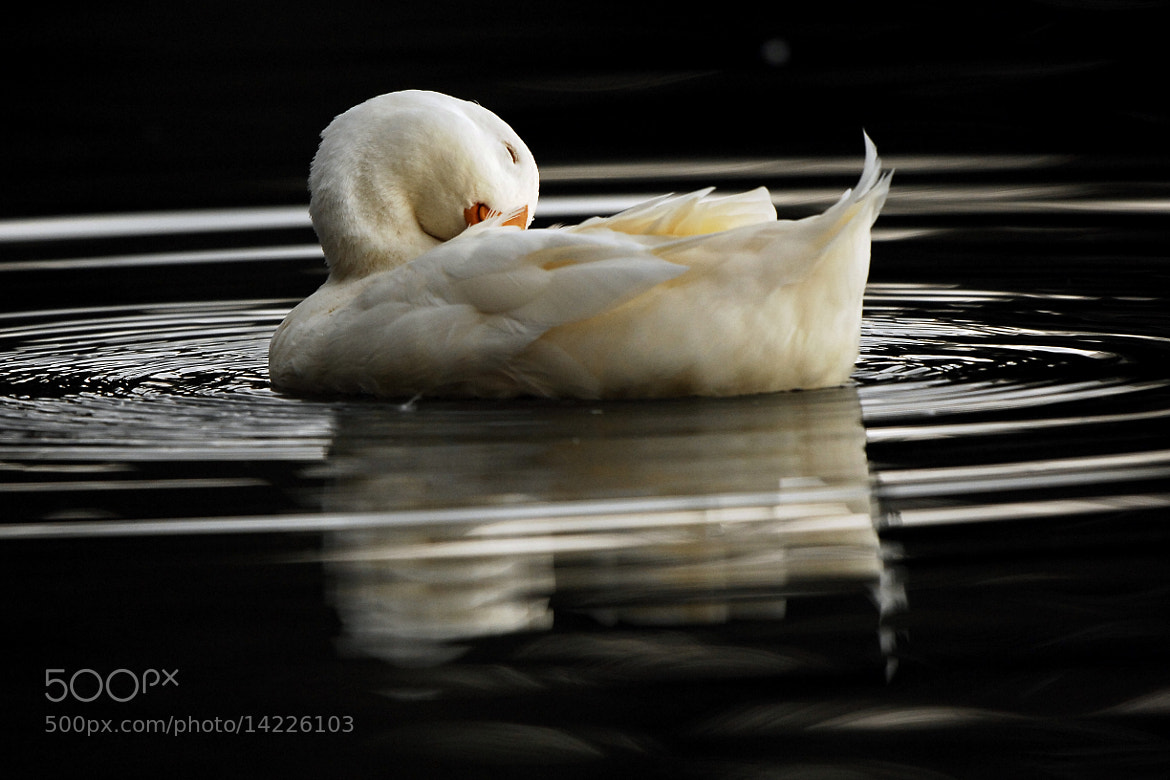 Photograph Sleeping on the water by Cristobal Garciaferro Rubio on 500px