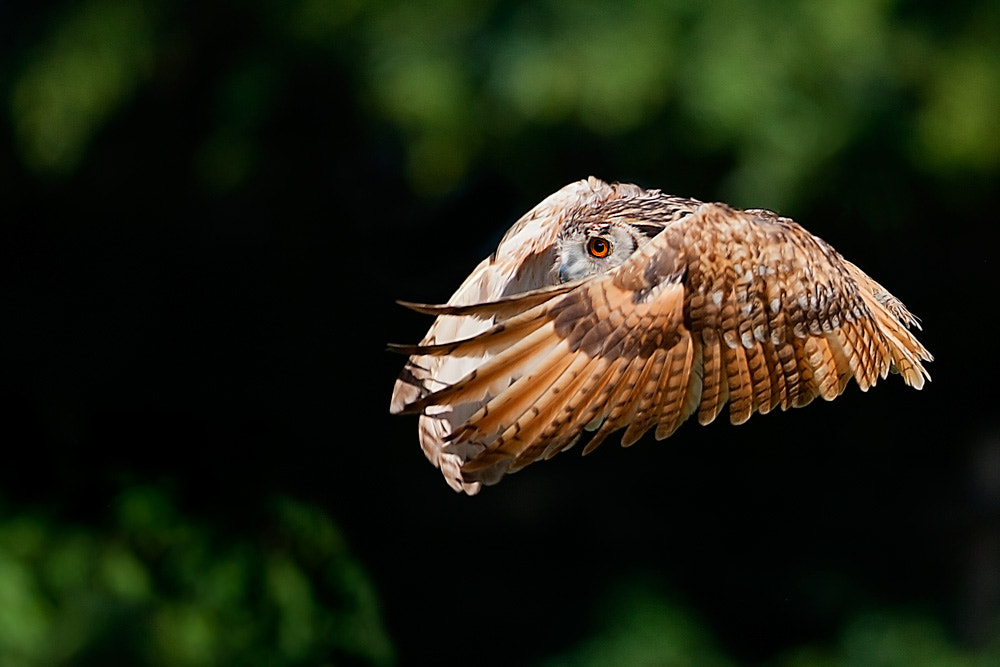 Photograph Owl by Stefano Ronchi on 500px