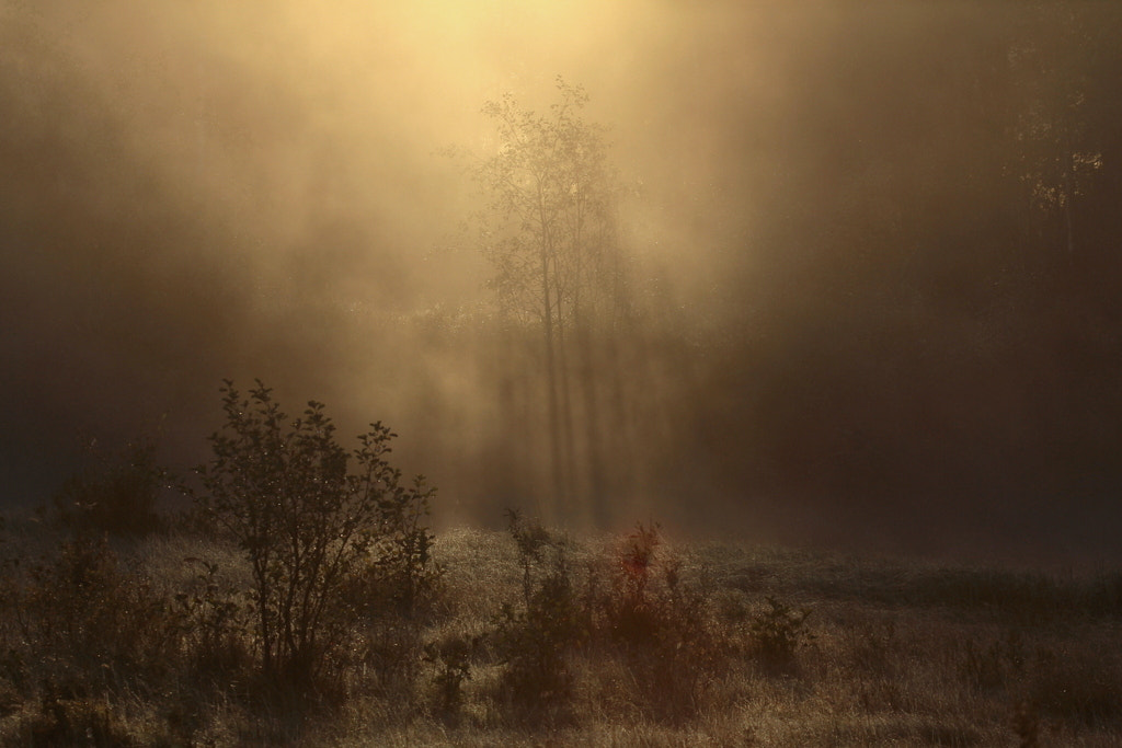 Photograph morning light by Peter Engman on 500px