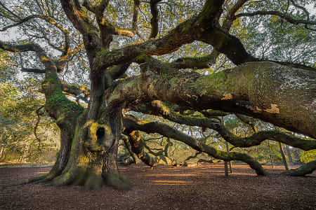 Angel Oak by Brian Wilson on 500px
