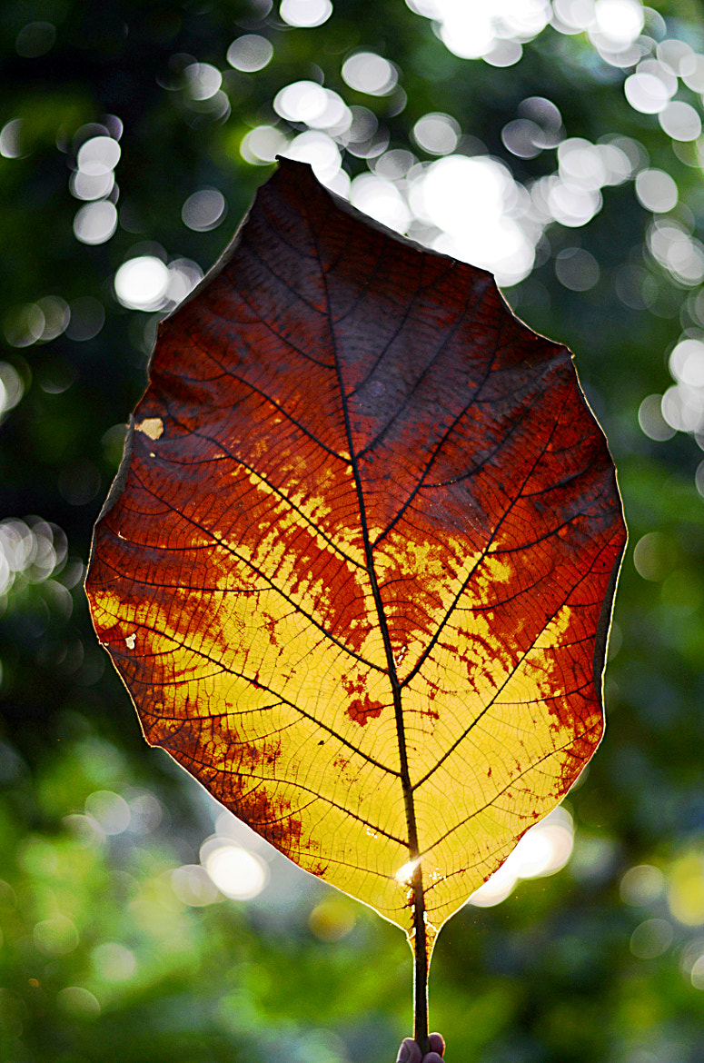 Photograph Rise of the fall by Tanvi Sharma on 500px