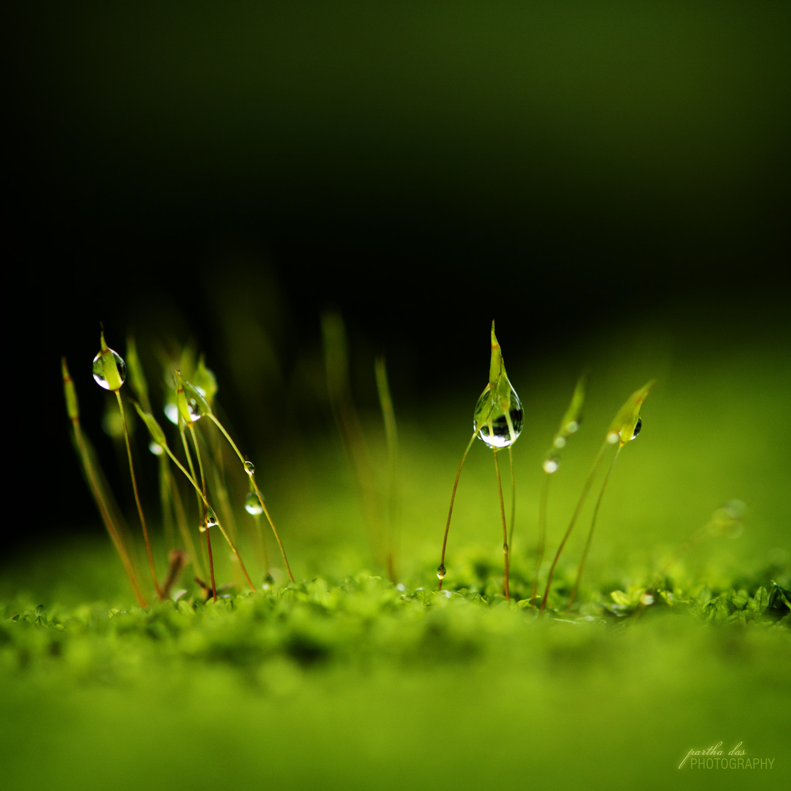 Photograph dew drops! by Partha Das on 500px