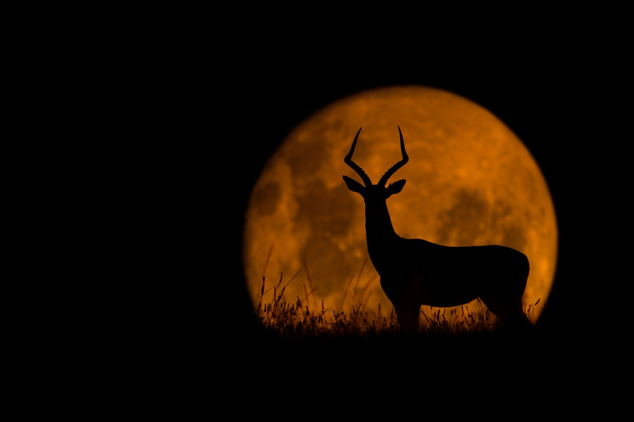 Photograph The Impala & The Moon by Mario Moreno on 500px
