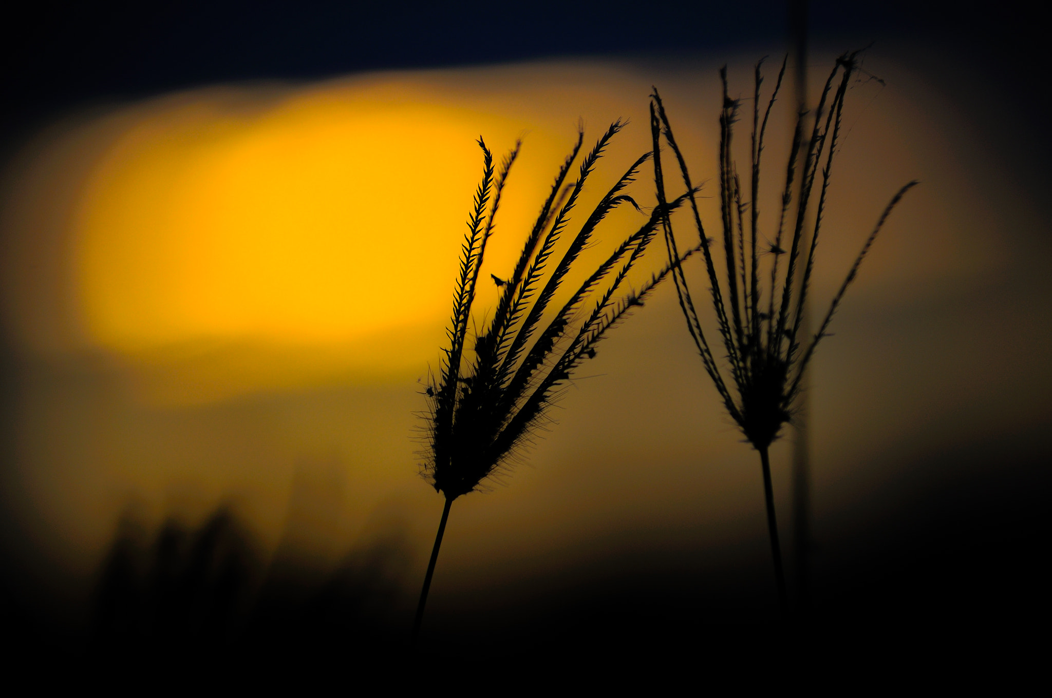 Photograph Grass in the sun by Naphat Sripated on 500px
