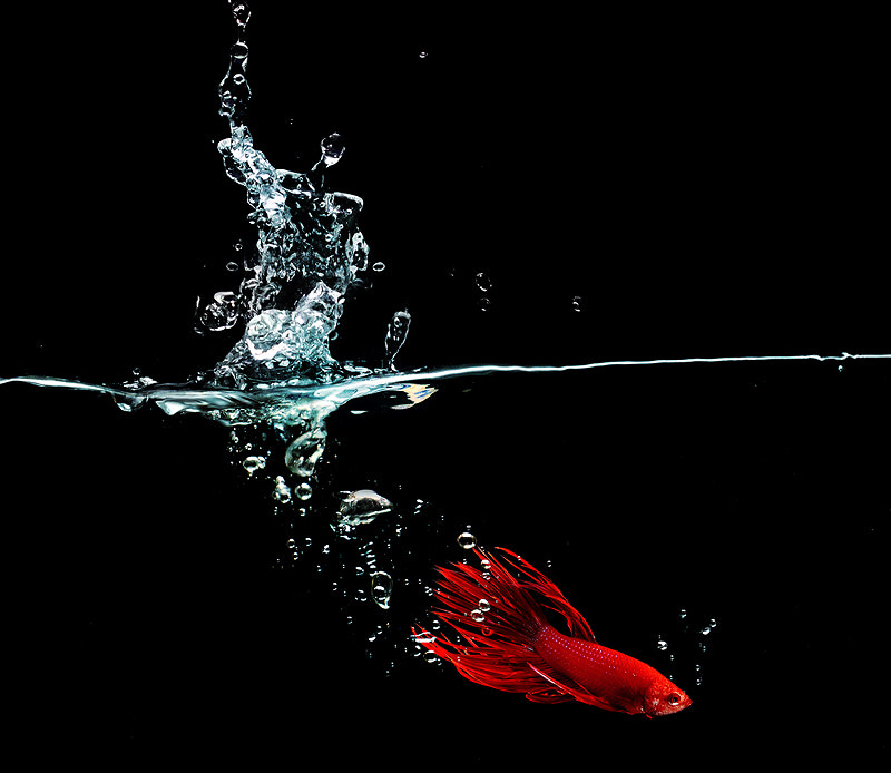 Photograph Fighting fish by Artlaboratory S on 500px