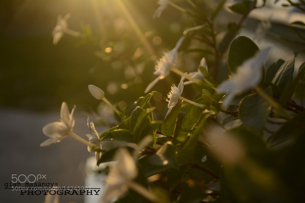 Photograph Sunray by Gi Masangya on 500px
