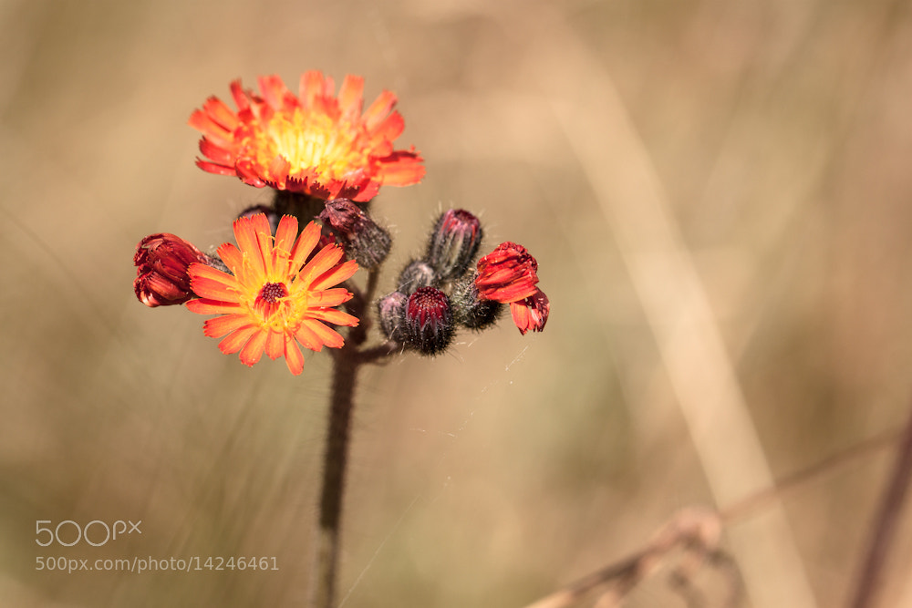 Photograph wild wild orange by Marion Fanieng on 500px