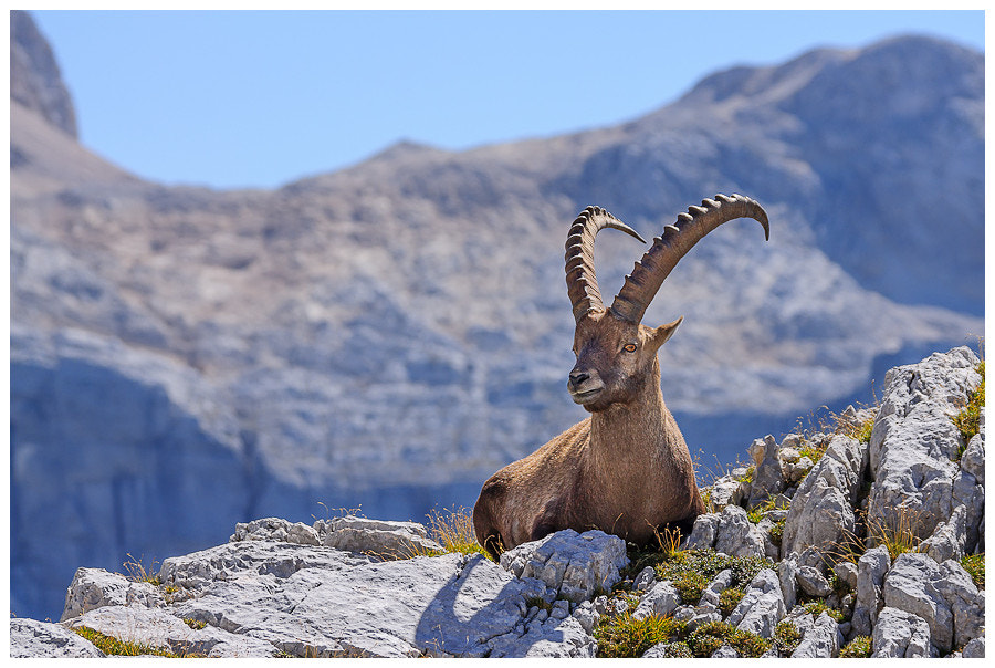 Photograph King of the hill by Simon Benedičič on 500px
