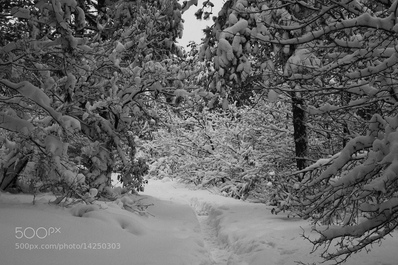 Photograph snow by Harun Bidar on 500px