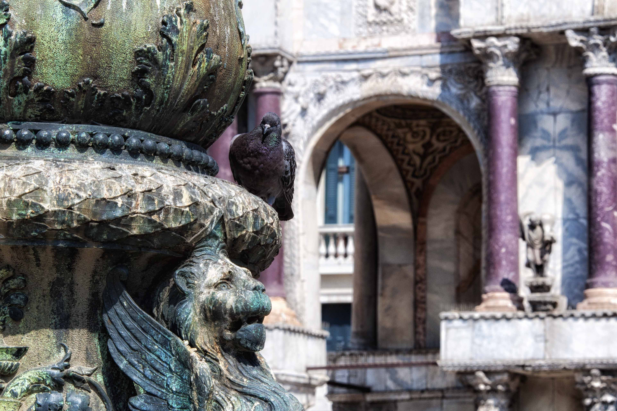 Photograph Pigeon Holed at San Marco Plaza by Ron Guernsey on 500px