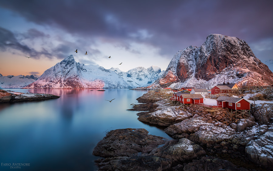 Birds by Fabio Antenore on 500px.com