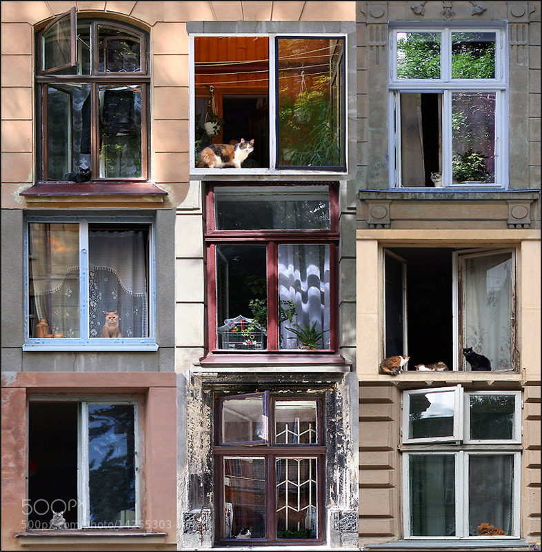 Photograph Cat's house (windows:) by Alla  Lora on 500px