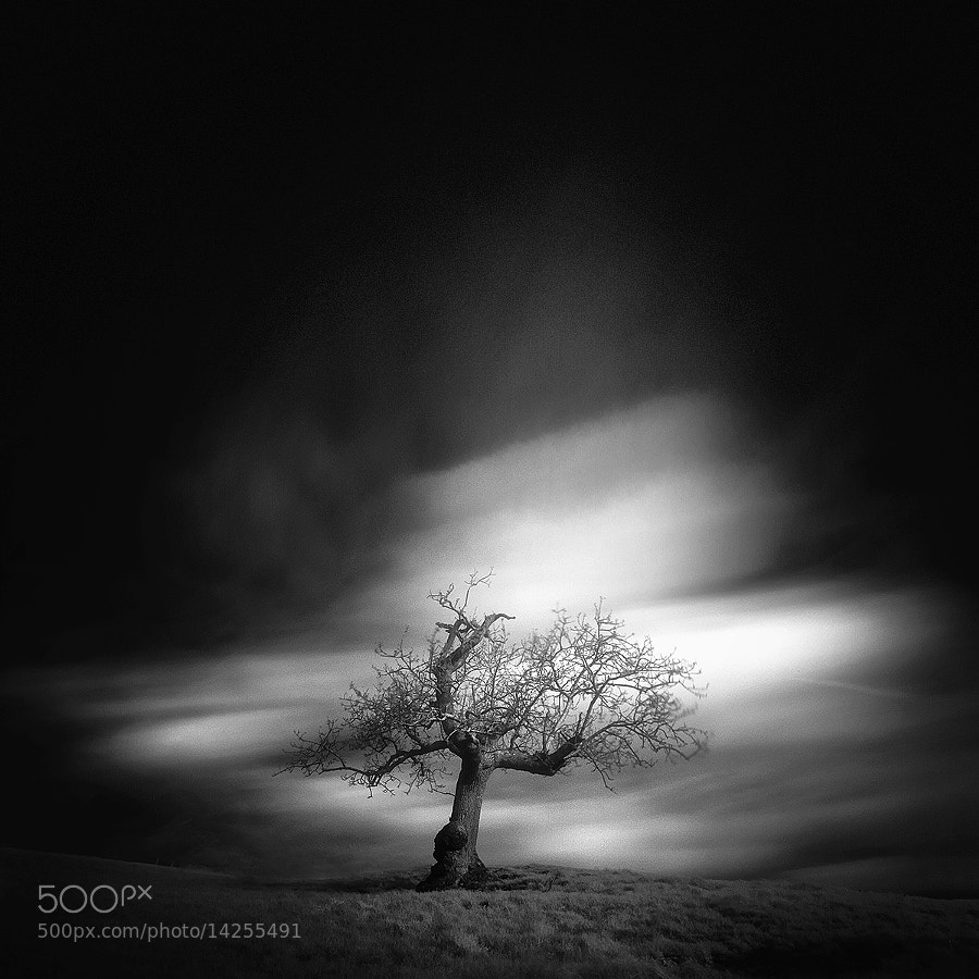 Photograph ѱ tree 1 / IV by Andy Lee on 500px