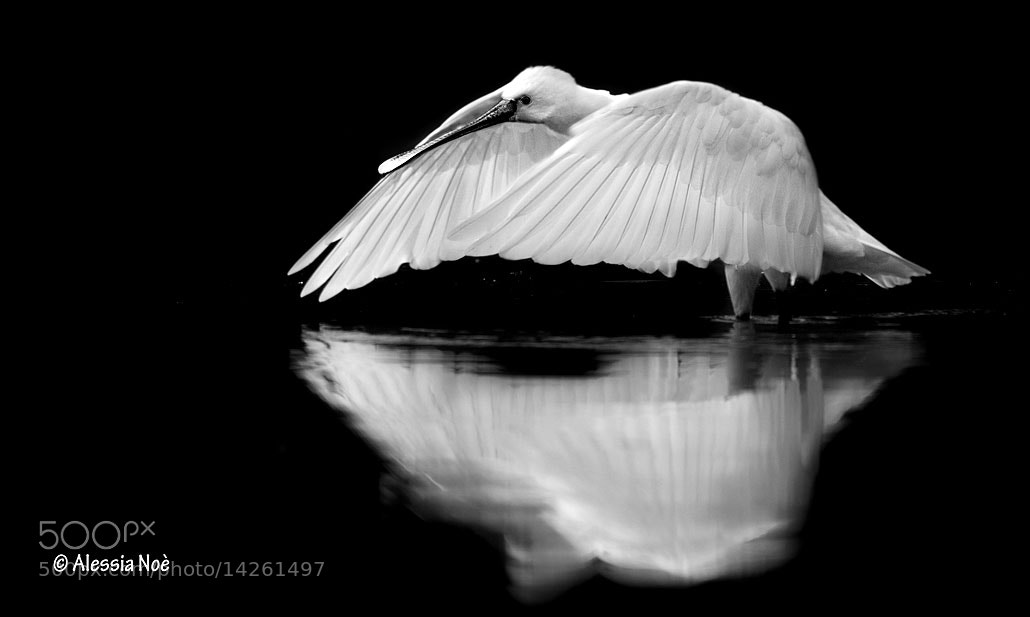 Photograph Reflection by Alessia Noè on 500px