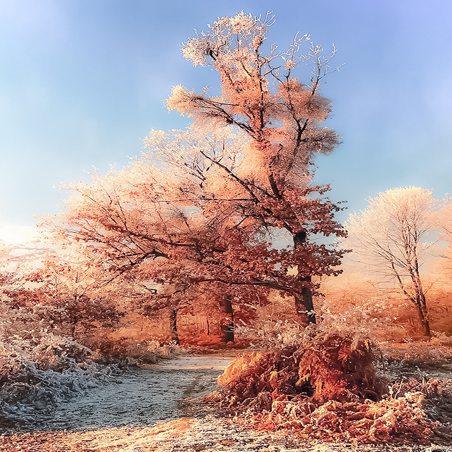 Red frozen, author - Costin Mugurel on 500px.com
