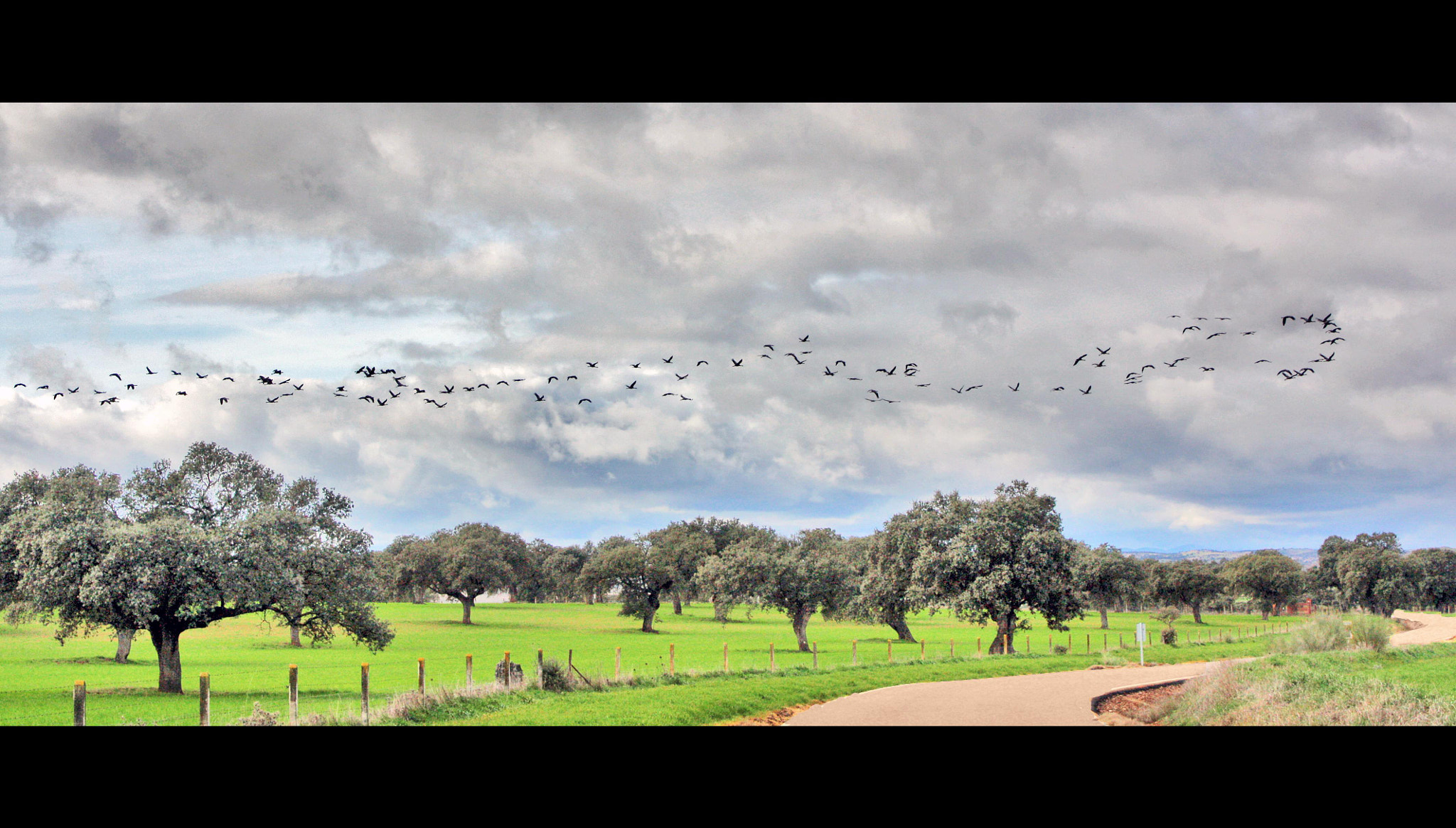 Photograph bird migration by Marichu Rodriguez on 500px