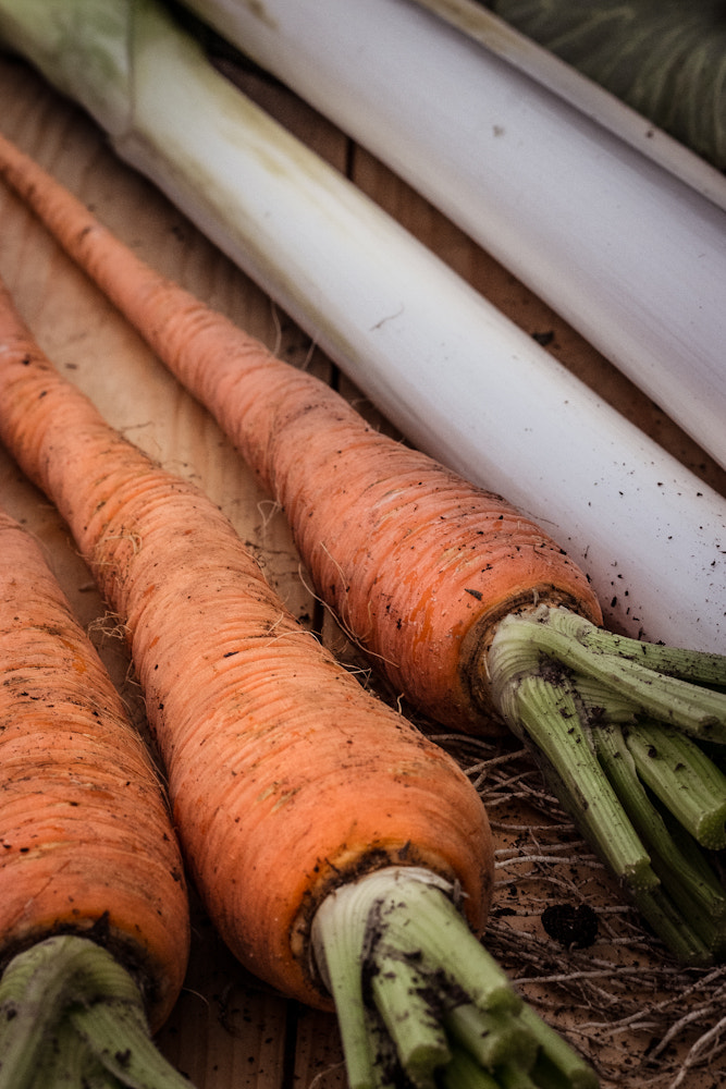 Photograph Winter Veg by Brian Shore on 500px