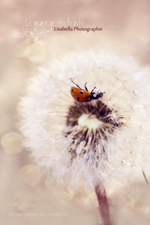 Photograph Coccinelle ... by Lisabella Fert on 500px