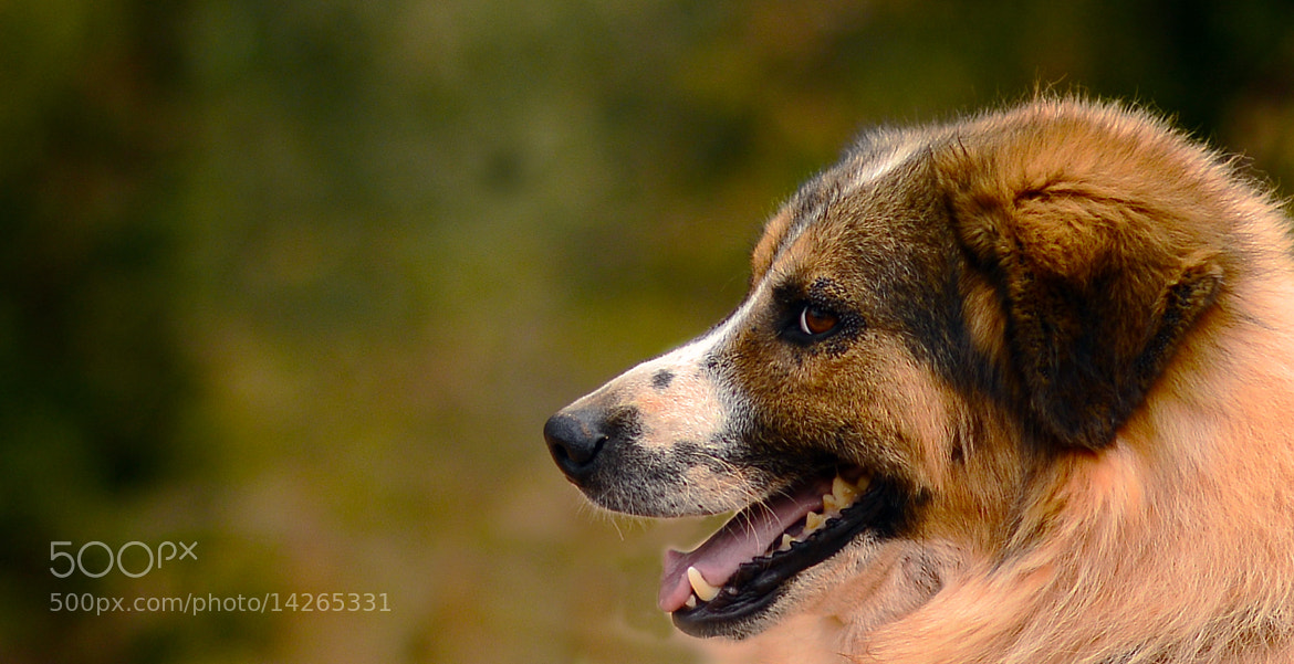 Photograph Puppy Profile by Peter Comninellis on 500px