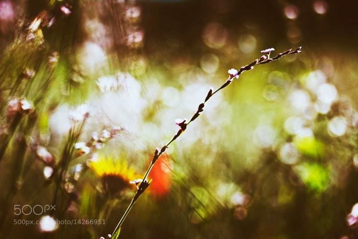 Photograph в боке by Kristina Manchenko on 500px