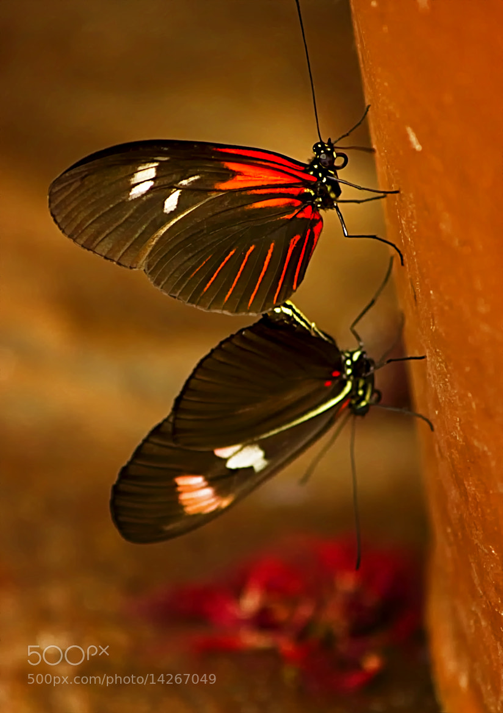 Photograph Butterflies by Linda Tiepelman on 500px