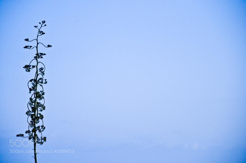 Photograph tree by Francisco  Pérez Phillips on 500px