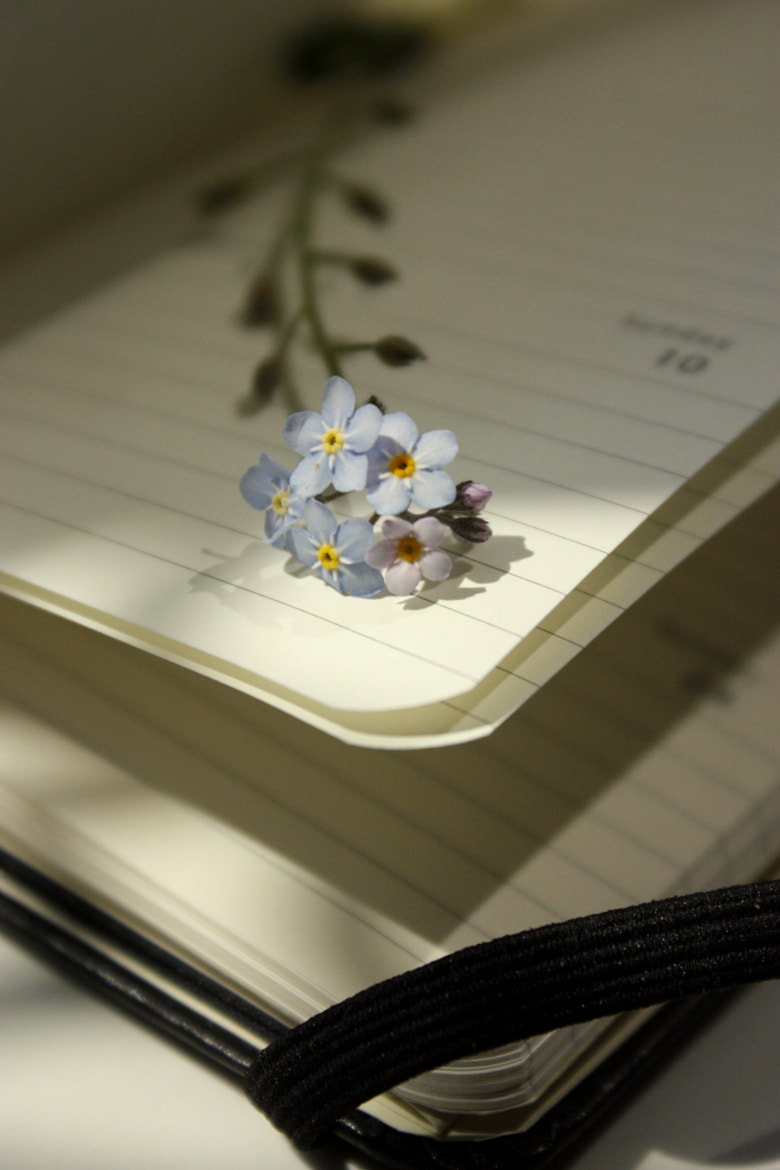 Photograph Forget-me-not by Tenderta  on 500px