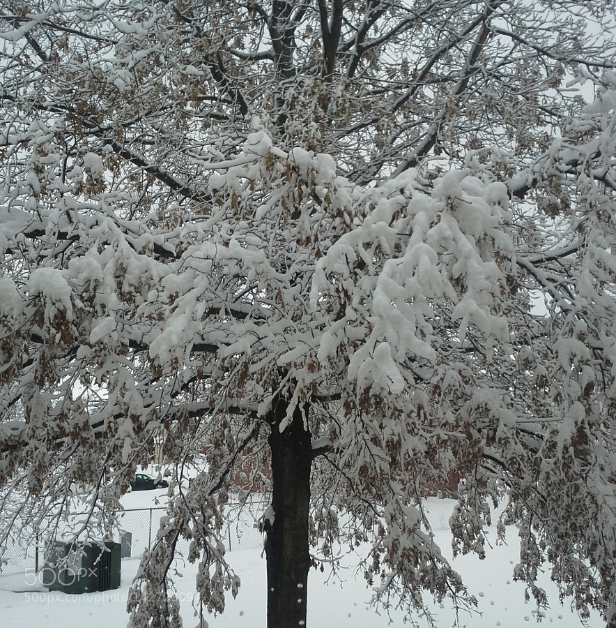 Snow-Covered Tree Outside My