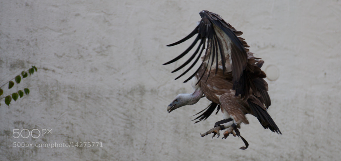 Photograph Clear for landing by Julian Wissmann on 500px