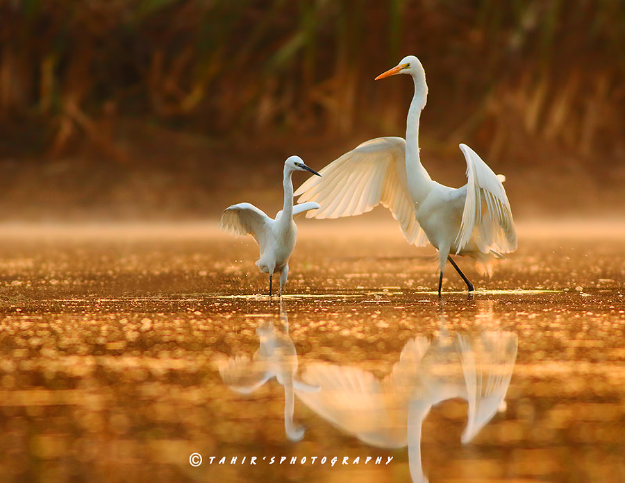 The dance lesson by Nature images on 500px.com